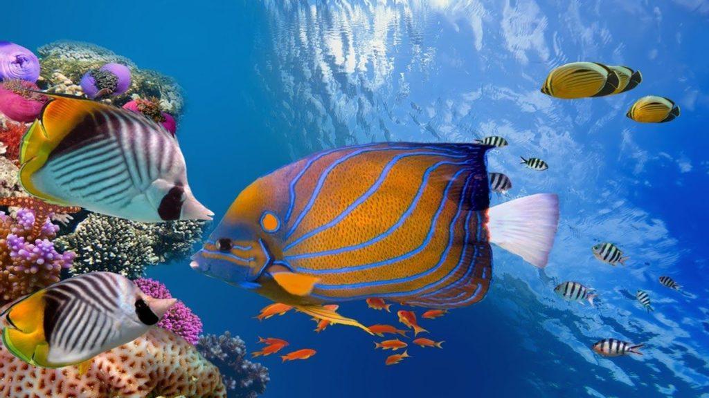 underwater sleep sounds
